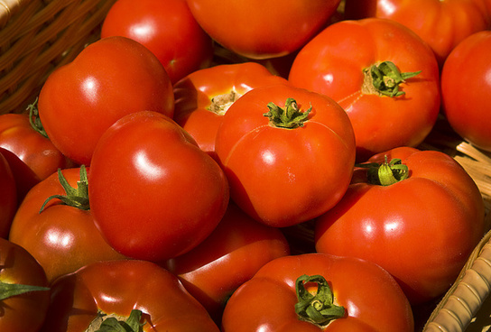 tomato reds