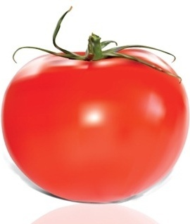 red tomato icon design closeup realistic style