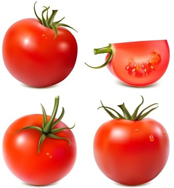 tomato icons shiny red design realistic decor