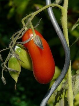 tomato vegetables red