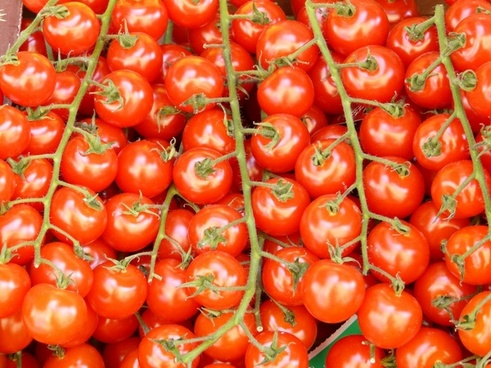 tomatoes tomatenrispe vegetables