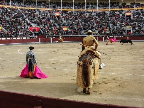 toro torero plaza