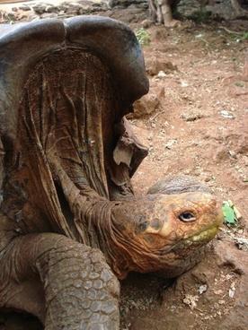 tortoise saddleback nature