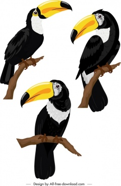 toucan bird icons colorful perching sketch