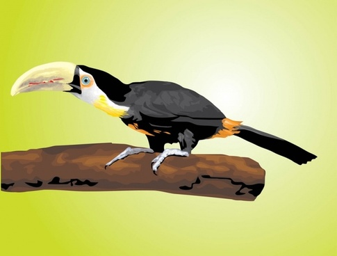 Toucan Vector