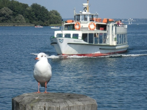 tourism ship seagull
