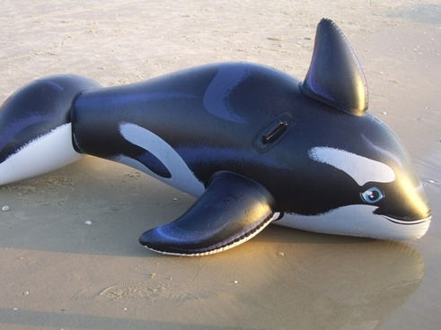 toy whale