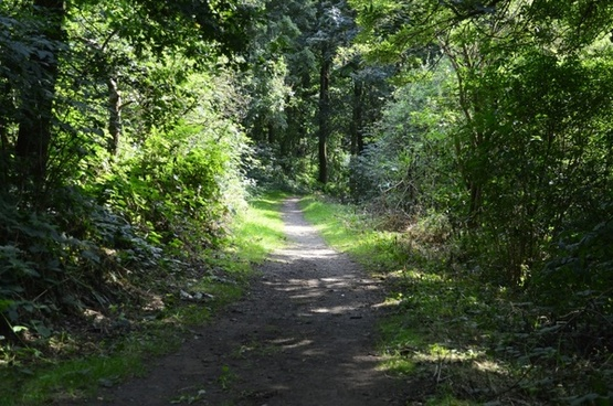 track country path