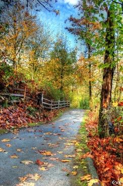 trail nature landscape