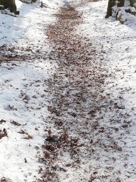 trail winter run