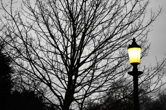 tree and street lighting