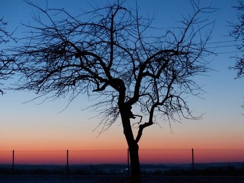 tree apple tree sunset