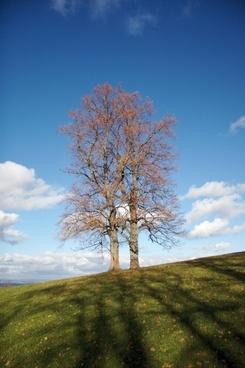 tree autumn autumn mood