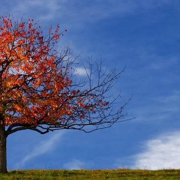 tree autumn leaves