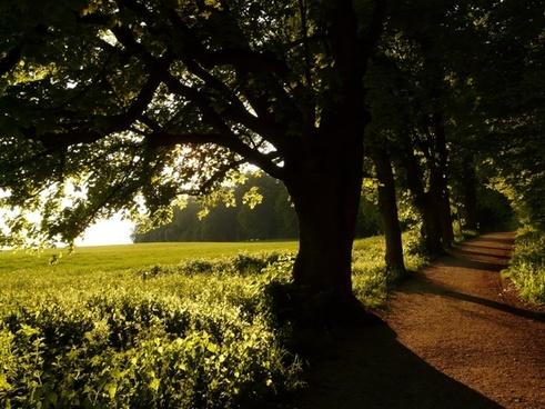 tree avenue back light