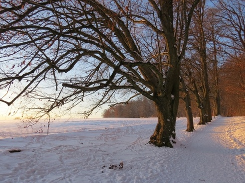 tree avenue snow