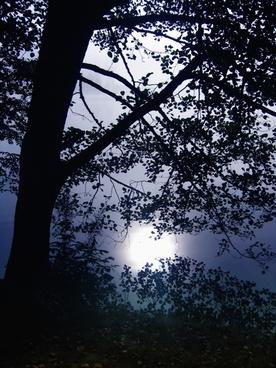 tree back light black forest