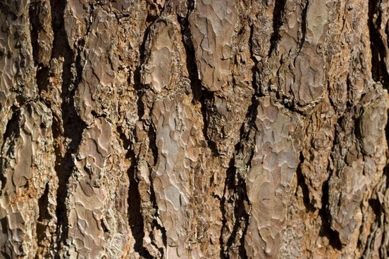tree bark brown