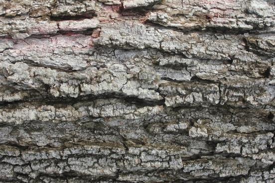 tree bark rough
