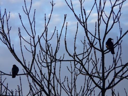 tree birds rest