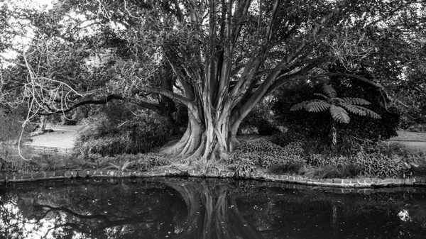 tree black and white water