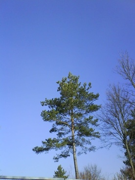tree blue green