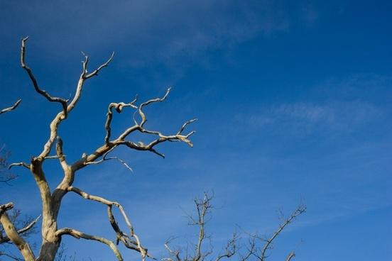 tree branch dead