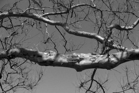 tree branch limb