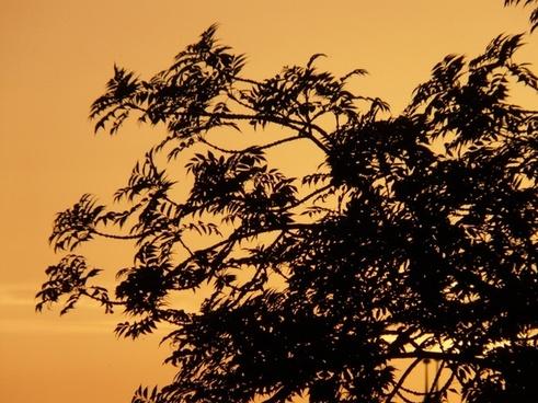 tree branch sunset