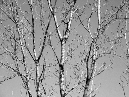 tree branches limbs