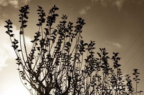 tree branches sepia