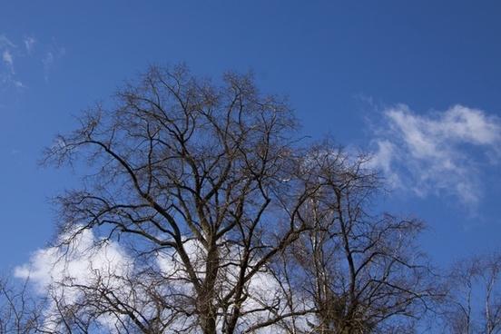 tree clouds sky
