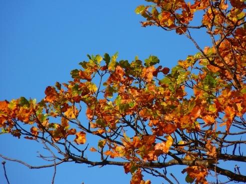 tree colorful leaves