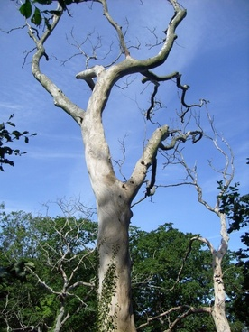 tree dead plant bornholm