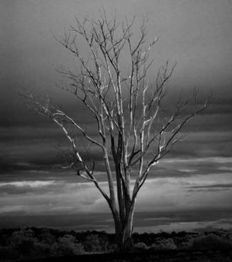 tree dead winter
