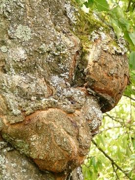 tree disease proliferation