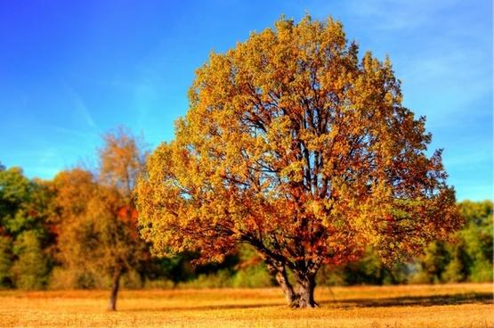 tree fall fall colors
