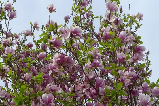 tree flower hanging flower