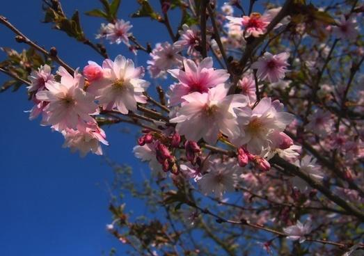 tree flower spring