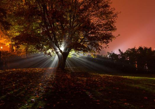 tree foggy