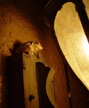 tree frog house light