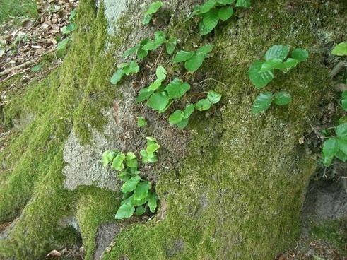 tree green moss