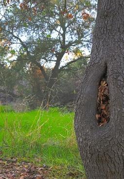 tree in a glen