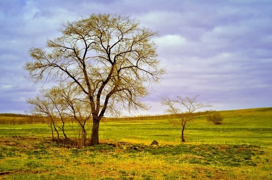 tree landscape field