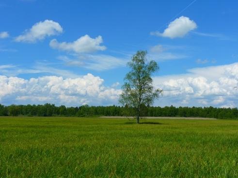 tree landscape meadow