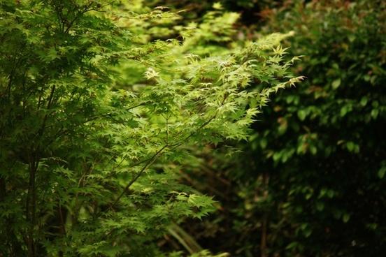 tree leaves green