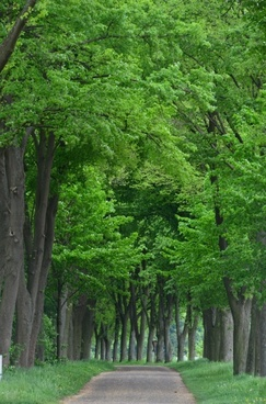 tree lined avenue forest avenue