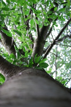 tree log leaves