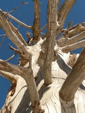 tree log wood