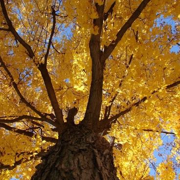 tree look up ground